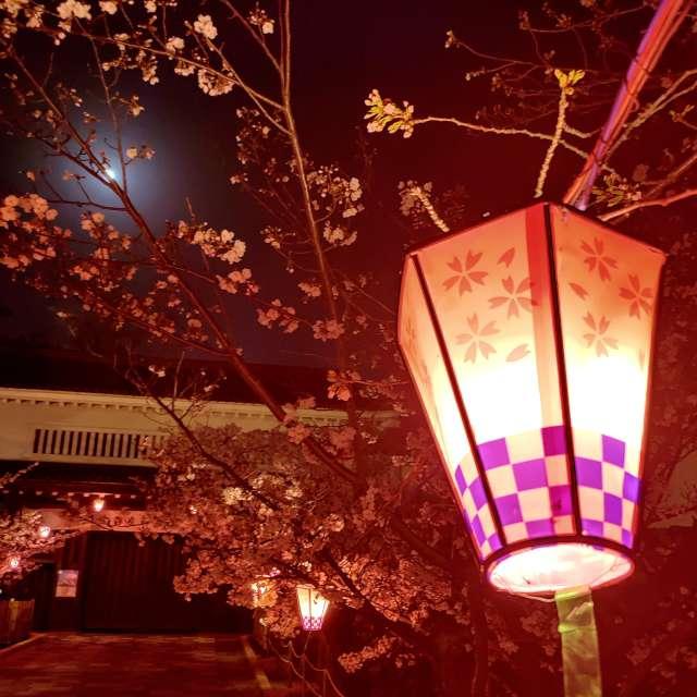 桜と明かりと