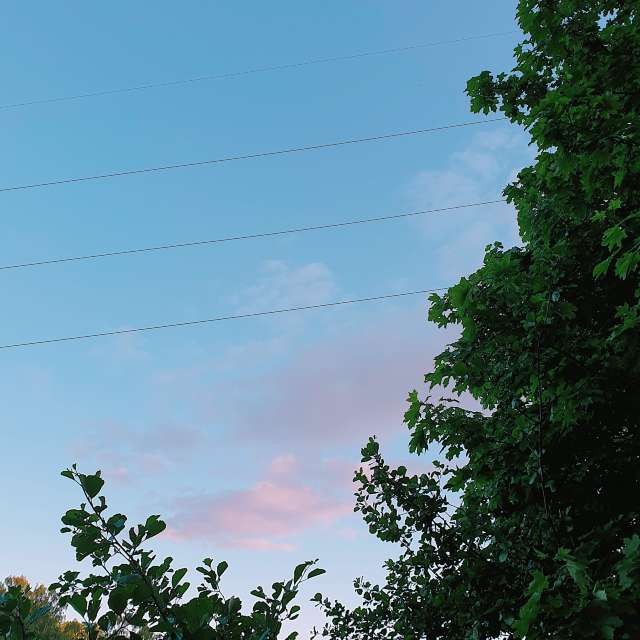 Tiny pink clouds in the sky
