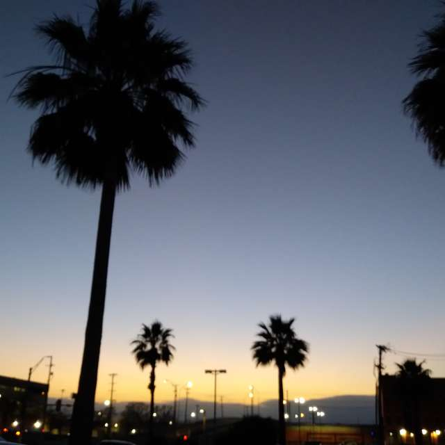 Sunset Palms Downtown