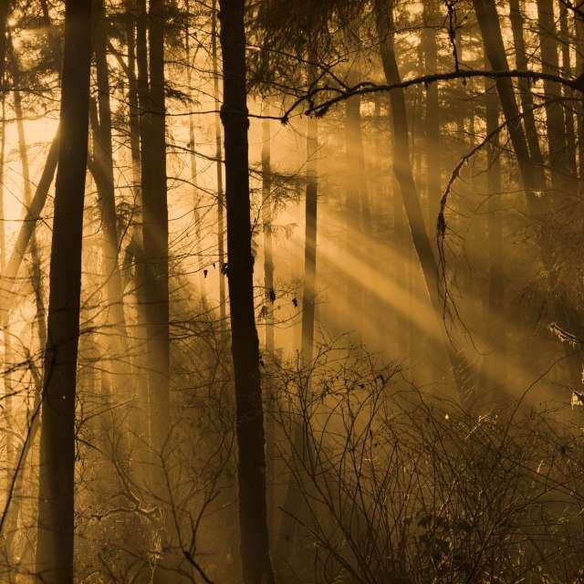 Morning Sun Rays, BC, Canada
