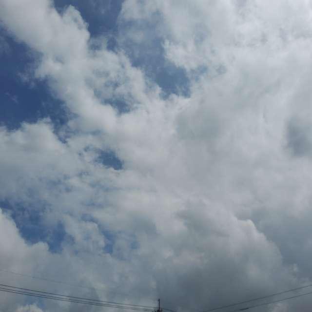 雲端起舞群
