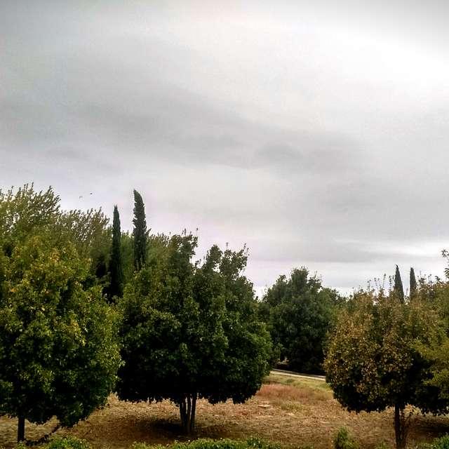 Parque del Alamillo