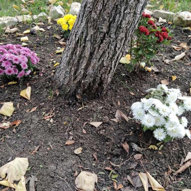 Красиви горски цветя