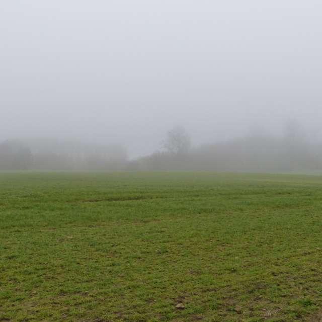 Waldsilhouette im Nebel