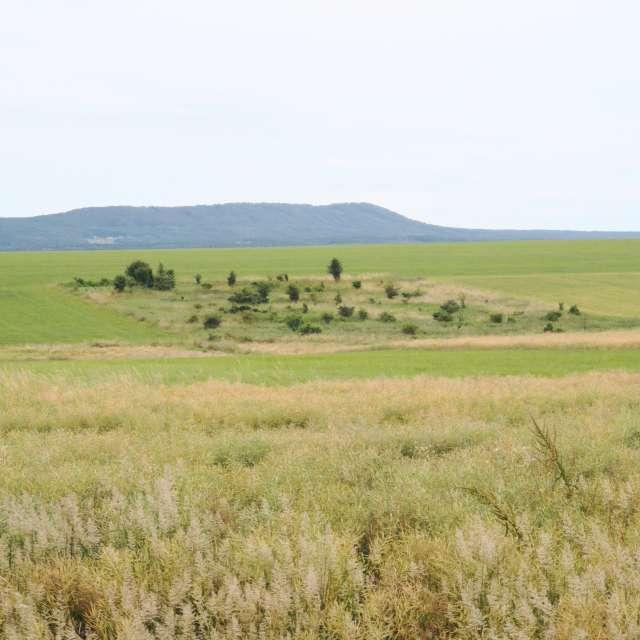 Solo field