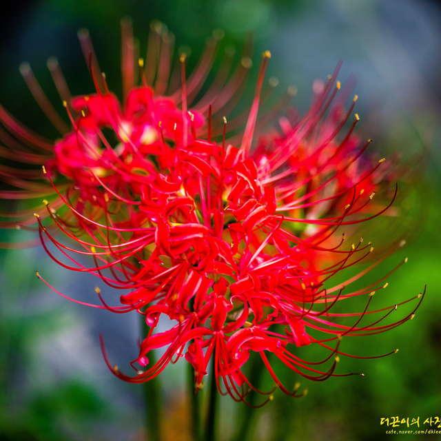 The flower bowl