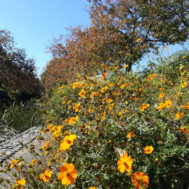 秋の二ヶ領用水