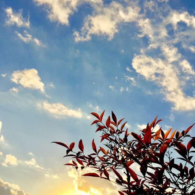 紅に染まる葉と夕景