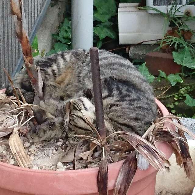 野良猫のお昼寝