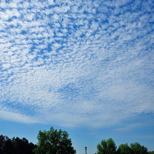Buttermilk and Mackerel Sky