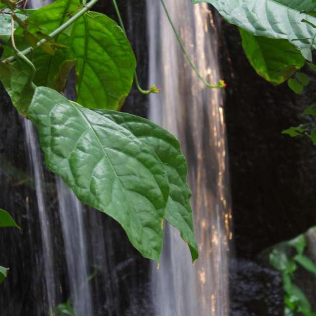 Sun w/ rain waterfalls