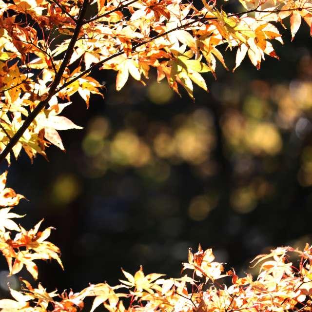 古峯神社の秋