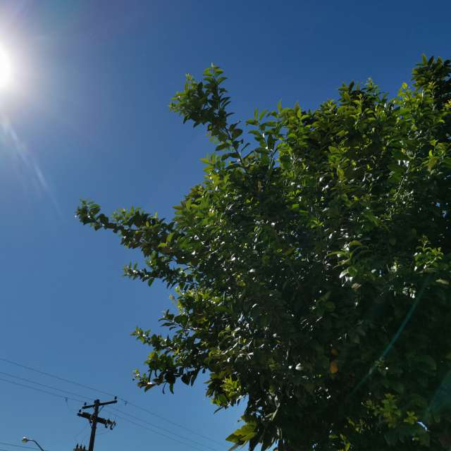 木と太陽と晴天