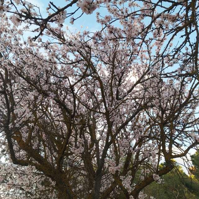 Se acerca la primavera