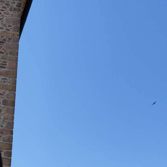 Mirando vuelo de golondrinas.