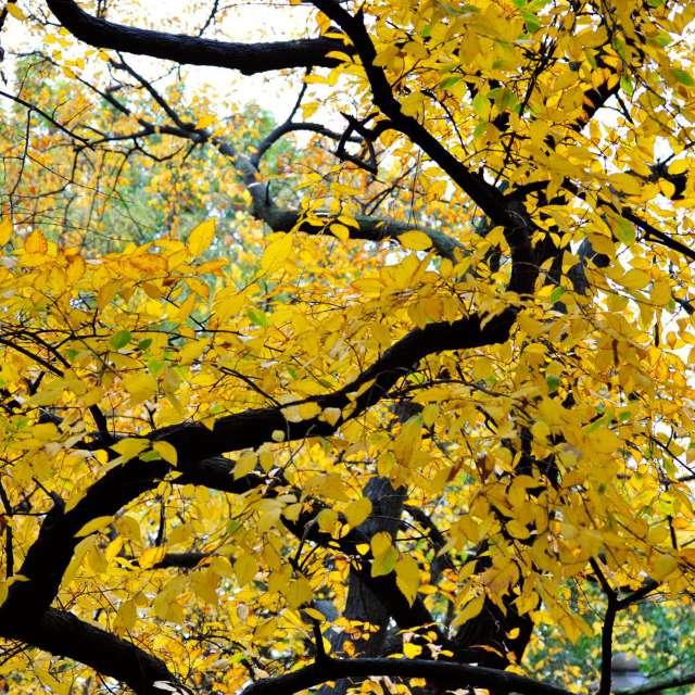 Autumn in Morningside park
