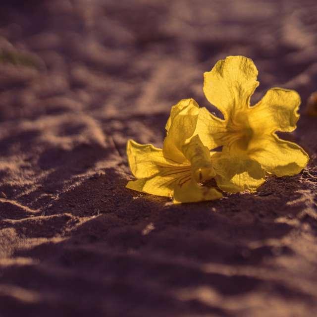 Paradise yellow flower