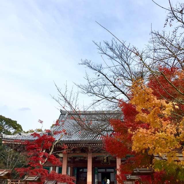 穏やかな陽気の京都