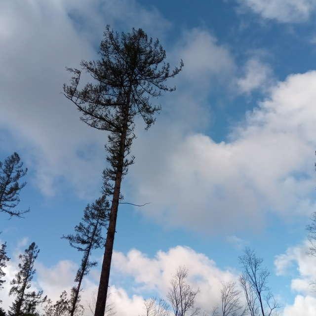 Mraky, stromy