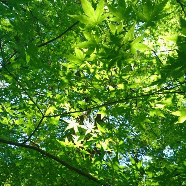 新緑の木漏れ日