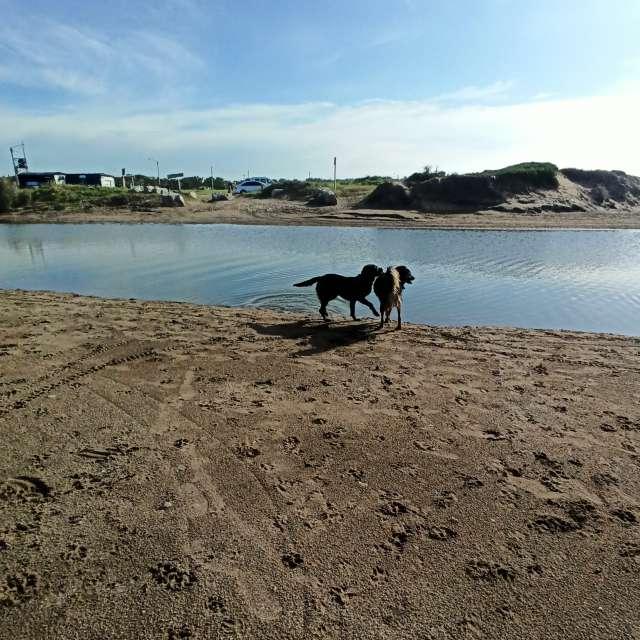 Mar de Cobo, arroyo y mar