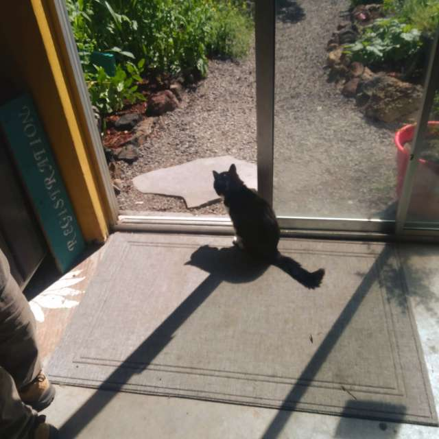 Oregon Cat