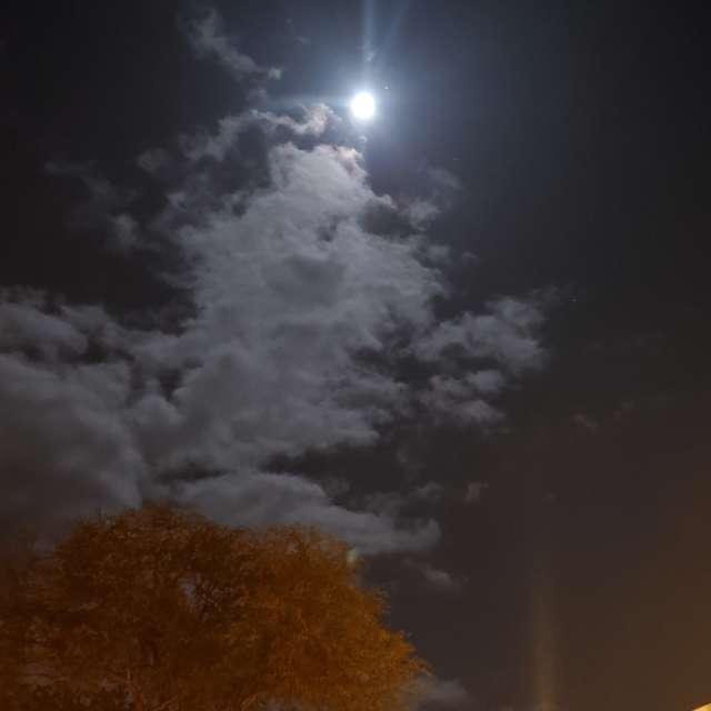 Kona Moonlight