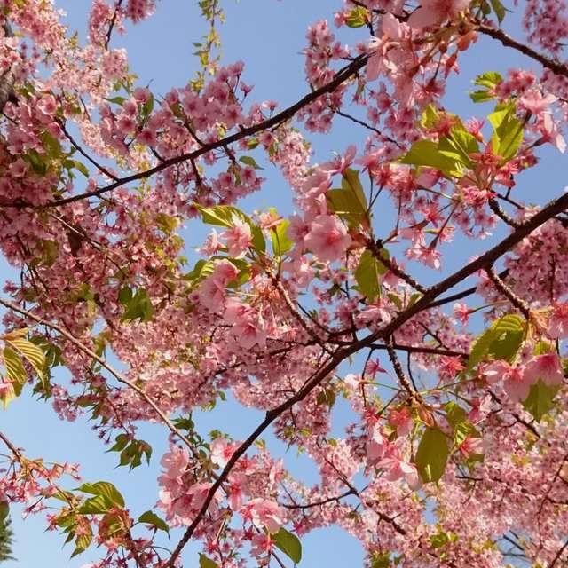 煌めく葉桜の中で