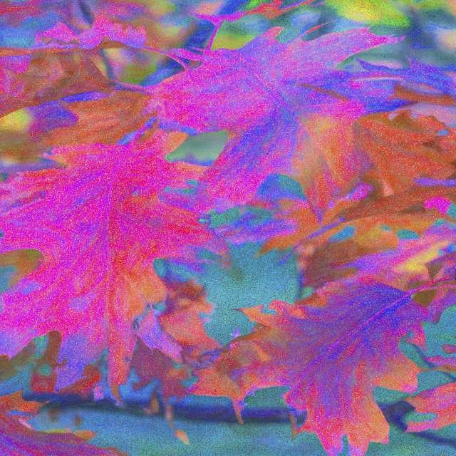 Oak leaves, autumn.