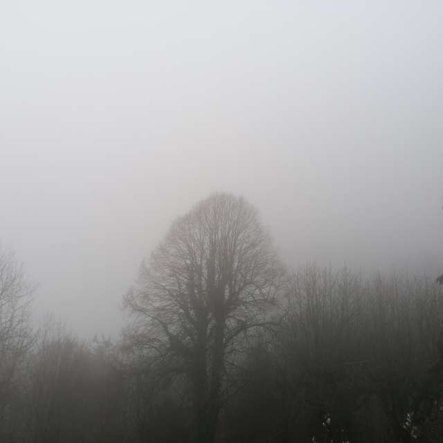 Nebelig / Fog