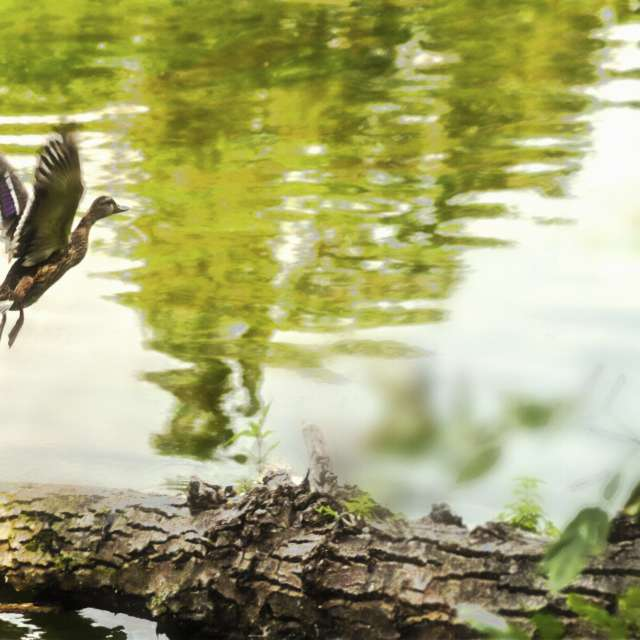 Flight. Walk by the riverbank.