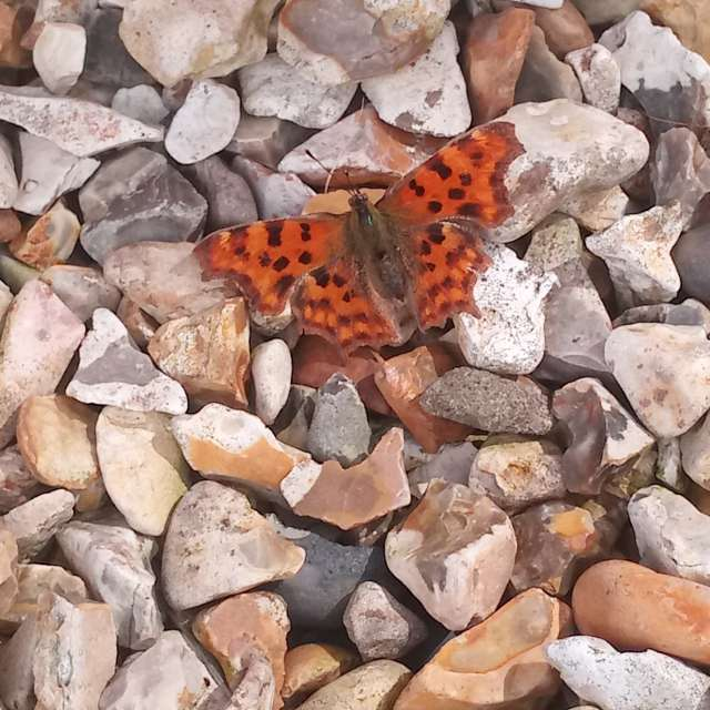 This is photo of a butterfly.