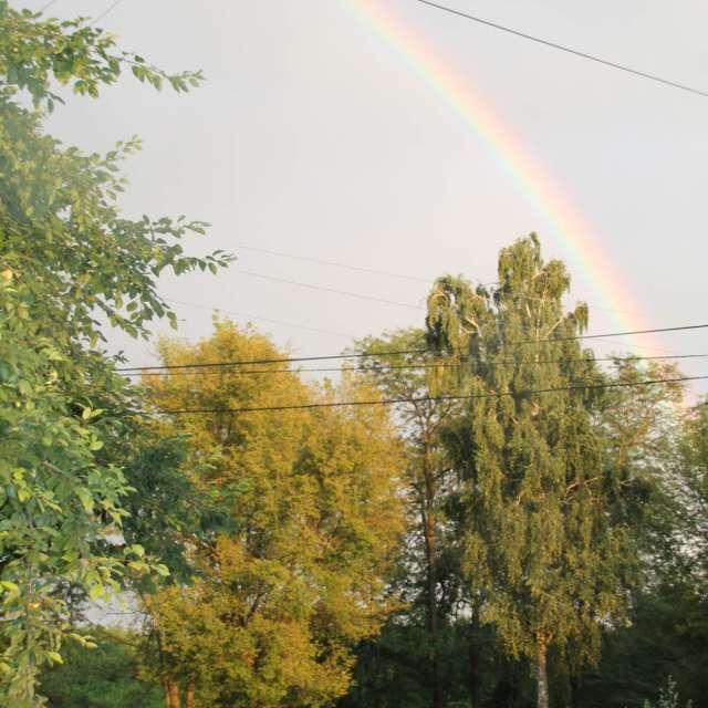радуга в  небе над  деревьями