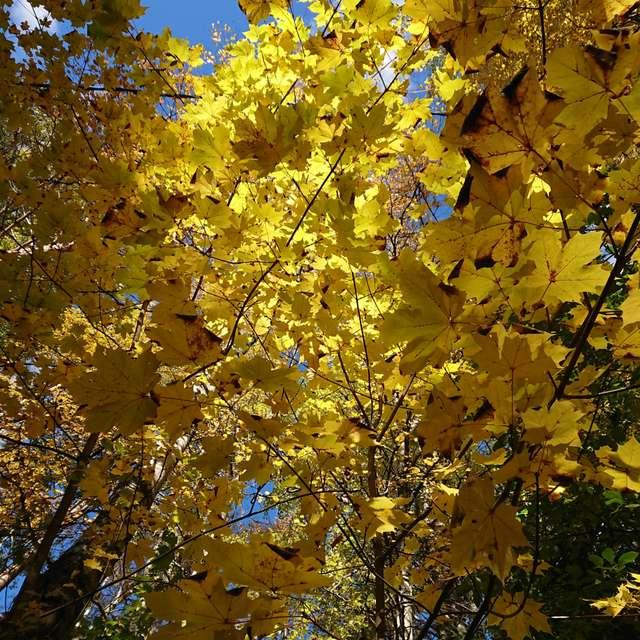 Yellow-upon-path