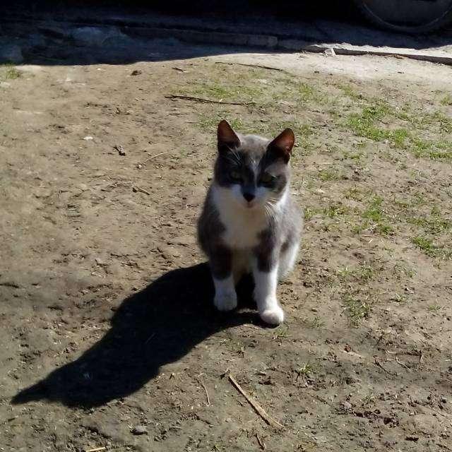 Действительно Чудесная Кот
