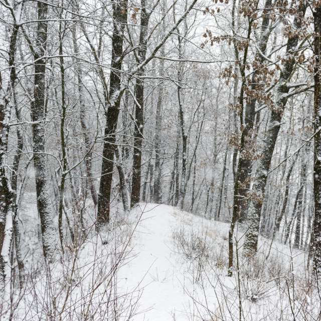 Forest during snowfall