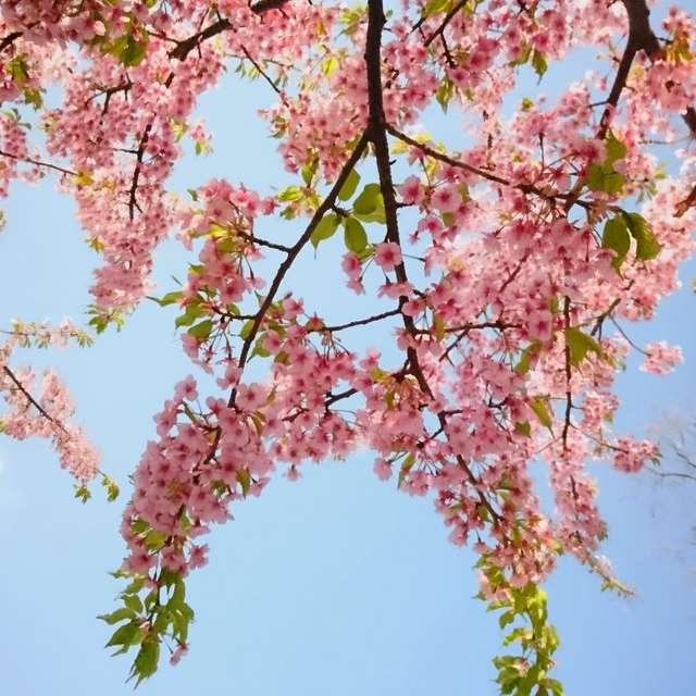 見上げると春