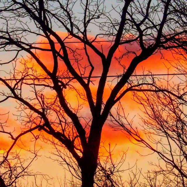 Tree at Sunset