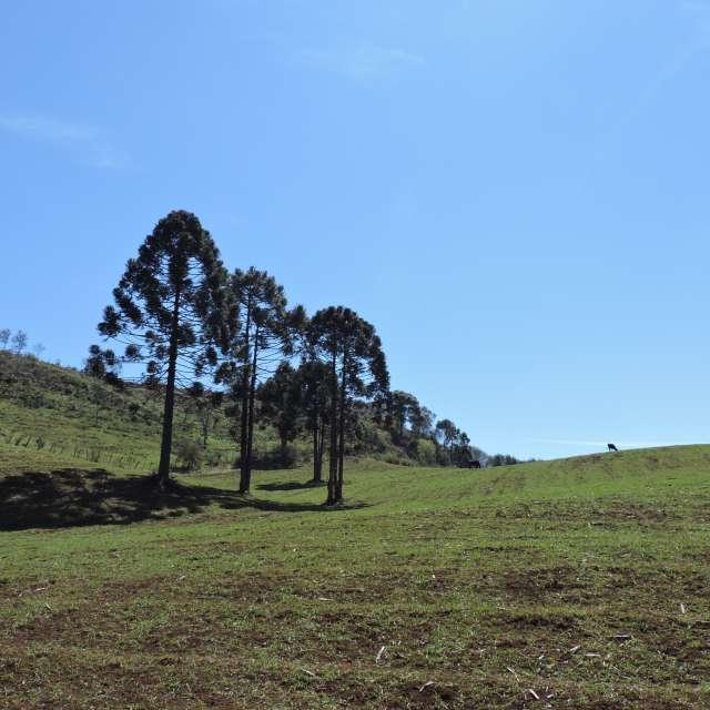 Campo gado