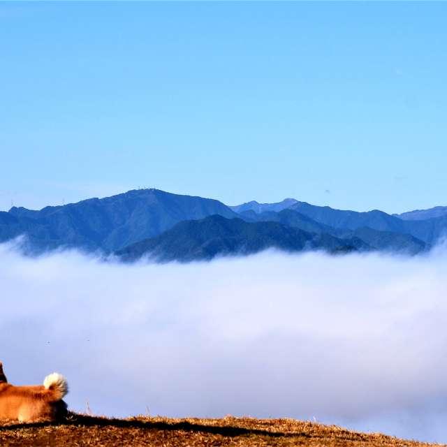 雲海につつまれる黒井城跡