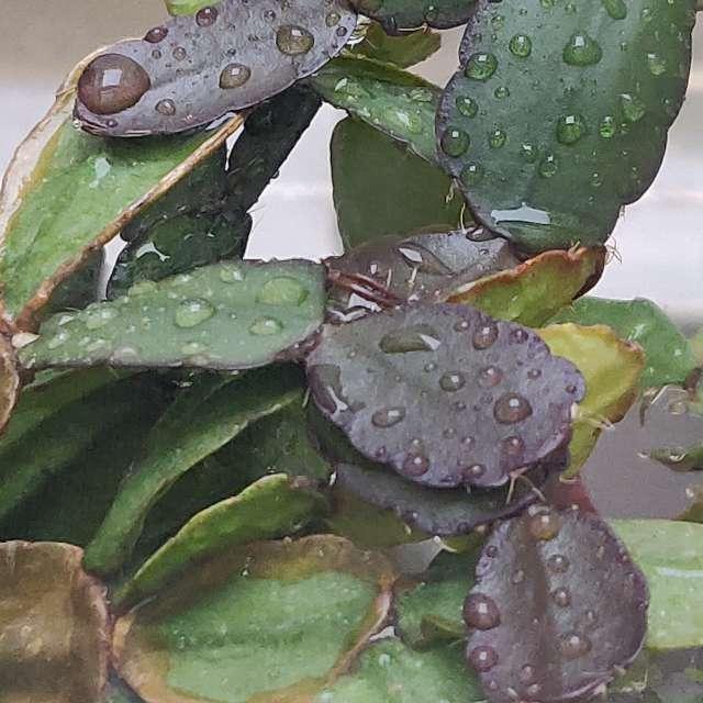 Lluvia sobre hojas de plantas.