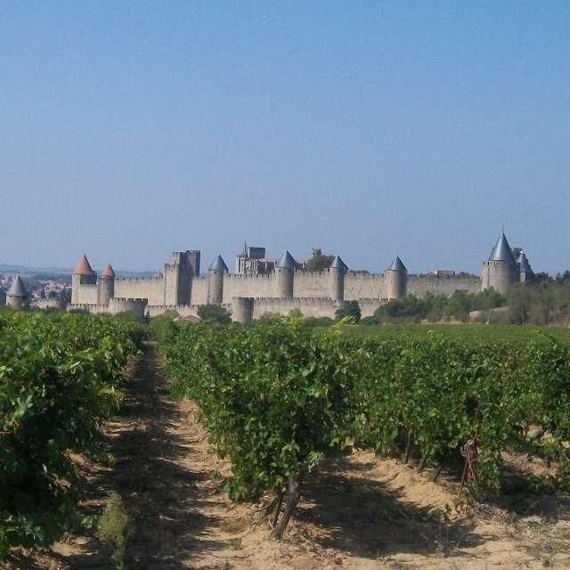 Vineyard in Carcassonne