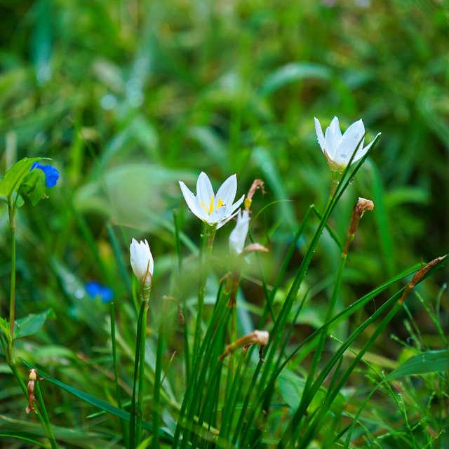 名もなき花