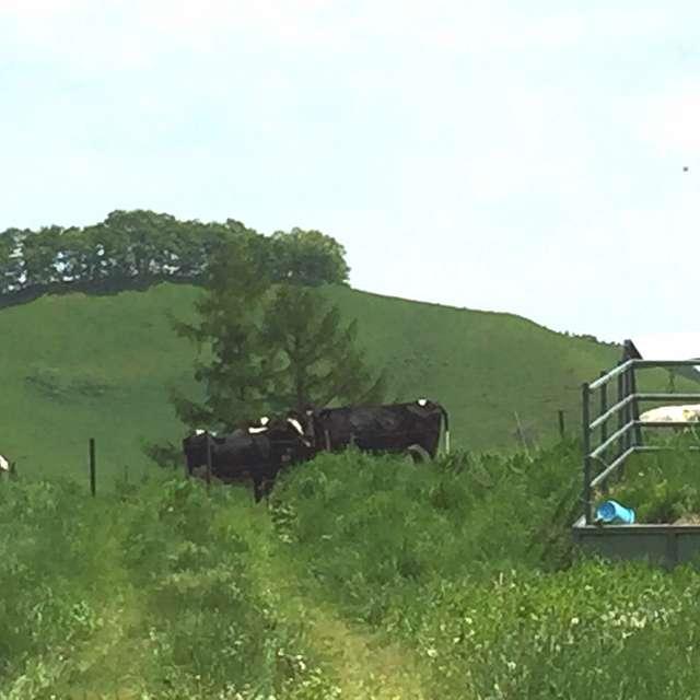 北海道,十勝 芽室町の町営牧場