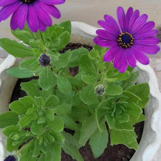 la romance d'aimer les plantes