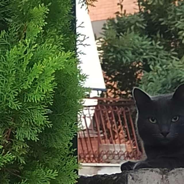 Minino negro
