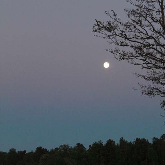 may night moon white night