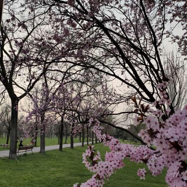 Madrid en flores