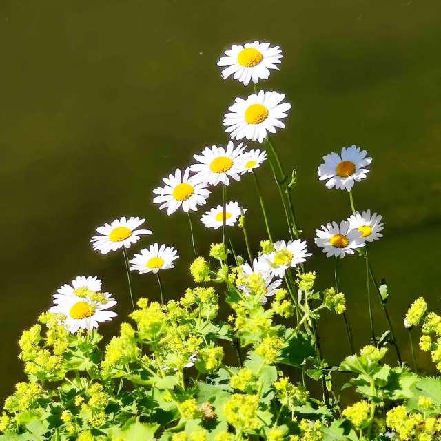 Flowers in Germany