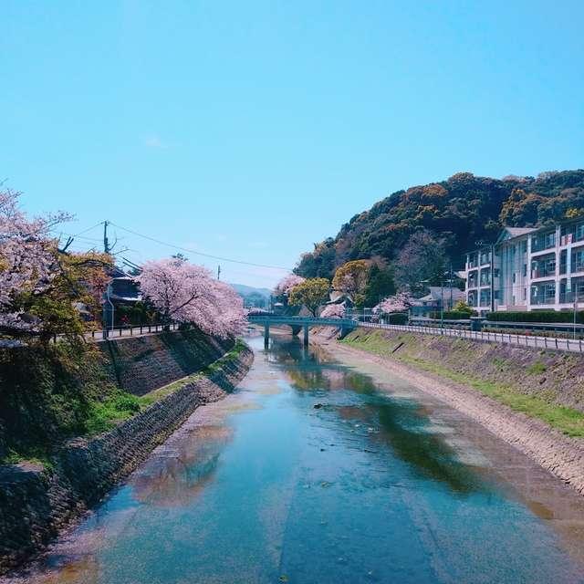 川面に映る桜